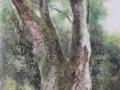 "Large Japanese Cinnamon Tree 3 29""x19"" Sold"